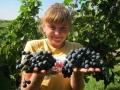 В учебном винограднике
