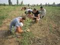 Учебная практика в плодовом питомнике колледжа